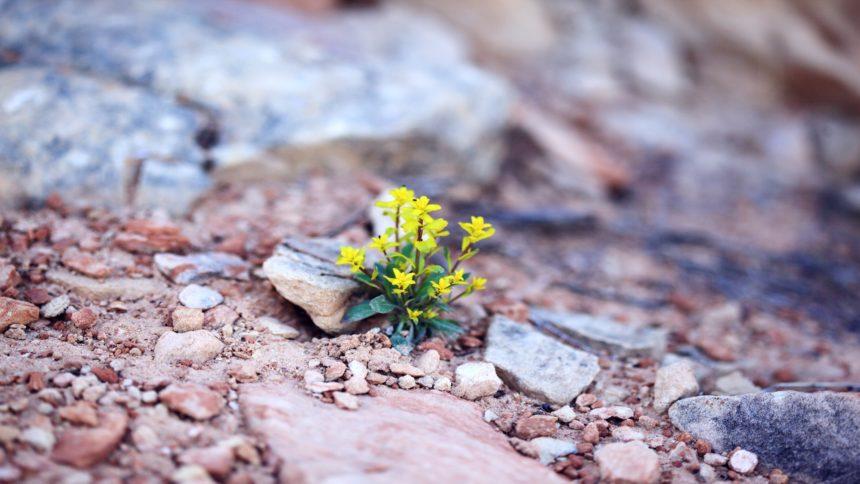 Positives stressbedingtes Wachstum